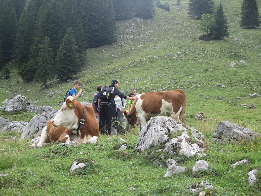 Konfis und Kühe