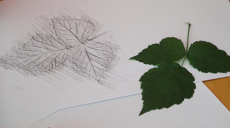 Zeichnung Baumblatt